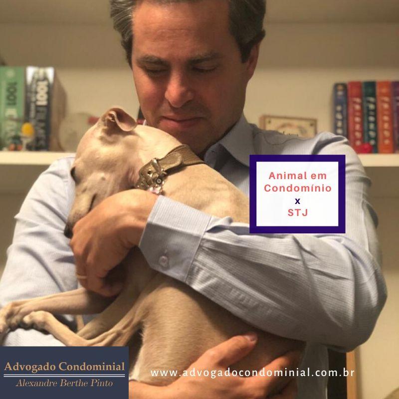 Posso ter animal em condomínio?