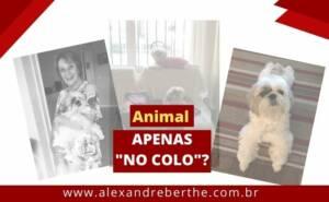 Animal Colo Condominio